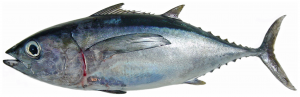 fish in florida keys